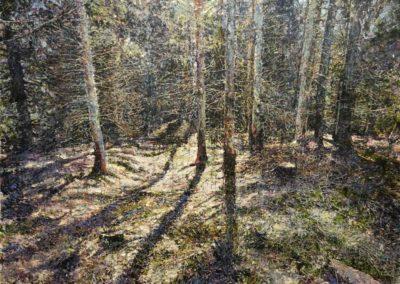 Luci nel bosco
